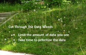 dataweeds