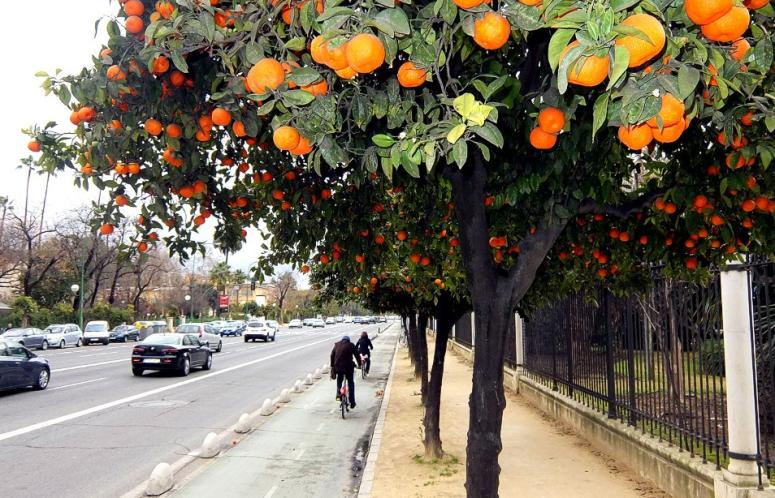 SevilleCyclings