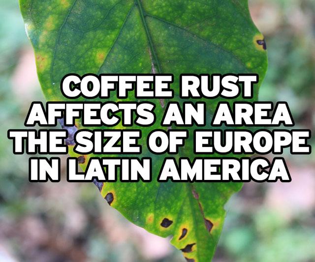 coffee-rust-09